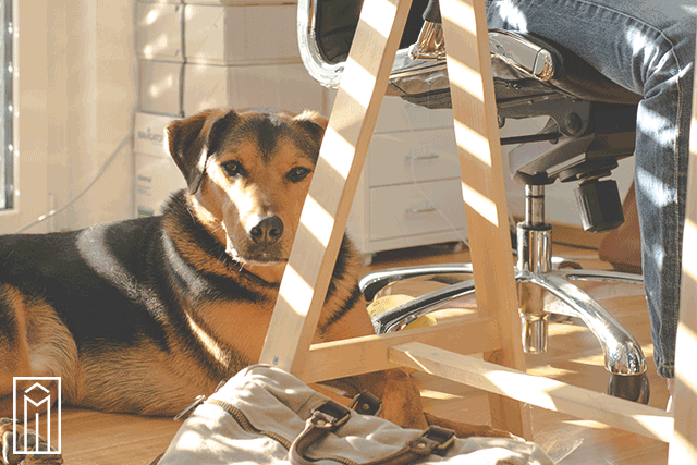 Benefits-_-Challenges-of-the-Dog-Friendly-Workplace